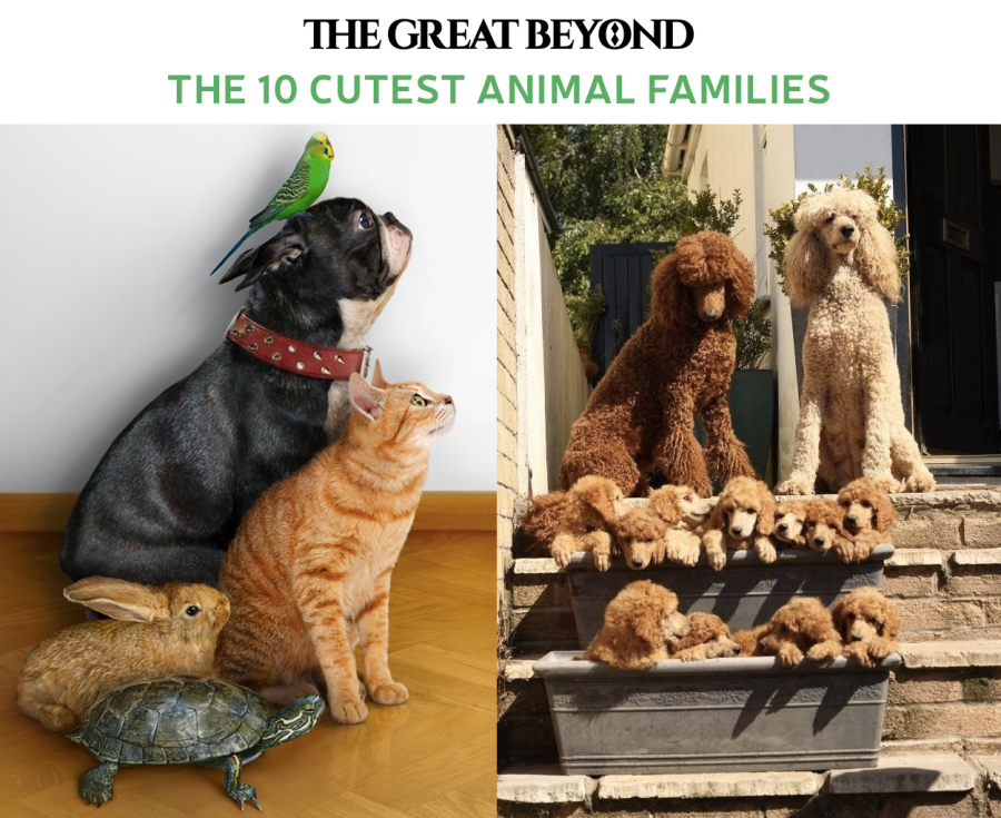 the-10-cutest-animal-families-the-great-beyond-bamboo-clothing